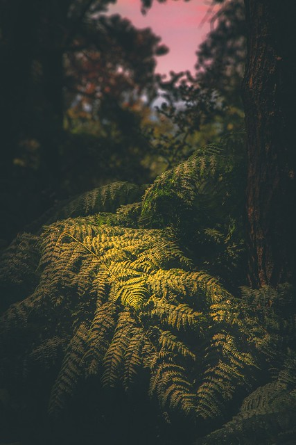 Last Light (explored)