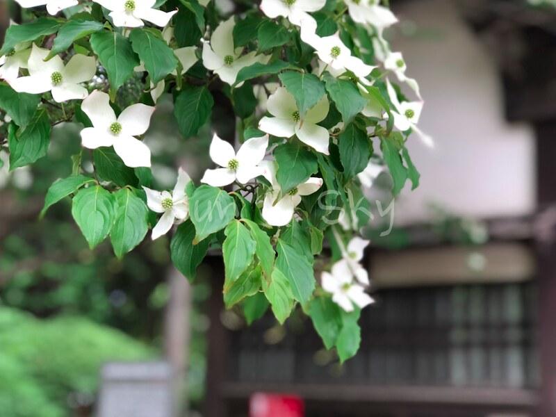 tohaku-flower