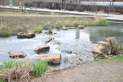 Wassergarten