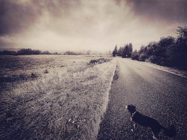 Moody, Misty August Walk