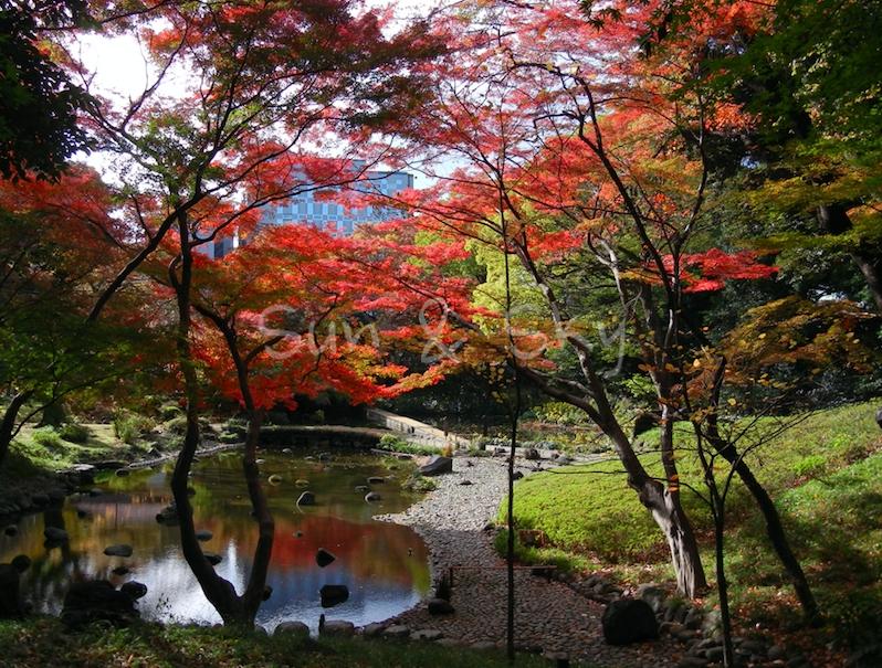 korakuen-trees