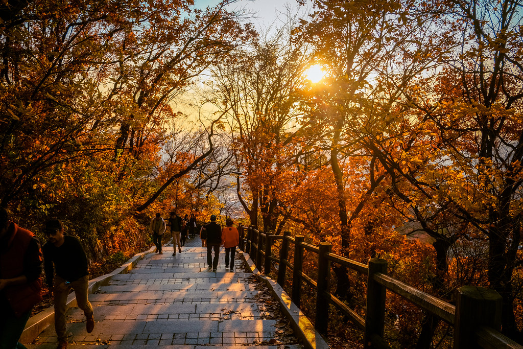 Namsan Tower Hiking Trail - Fall leaves during autumn in Korea