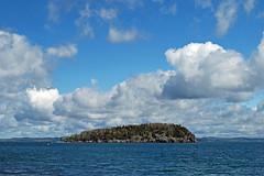 bald porcupine island