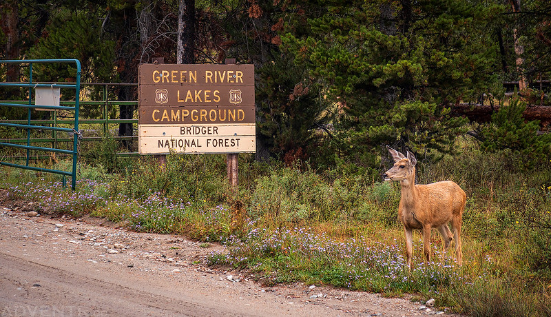 Campground Greeter