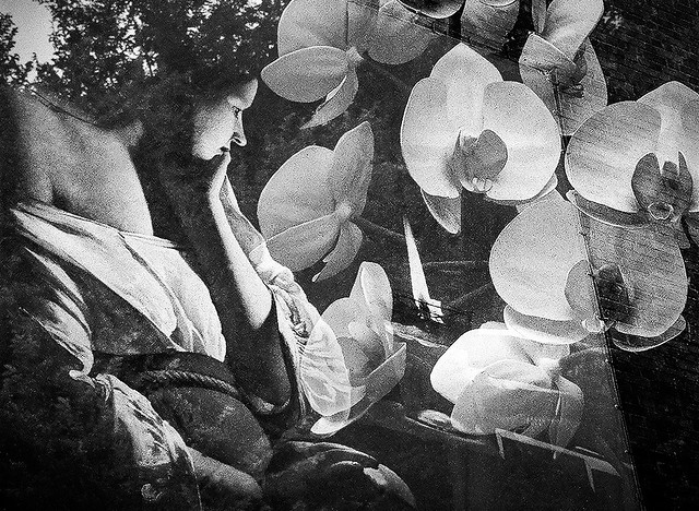 Contemplating Orchids