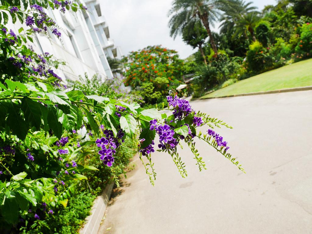 桃園楊梅景點雅聞魅力博覽館免費參觀歐式花園玫瑰園噴水池庭園造景植物園 (7)