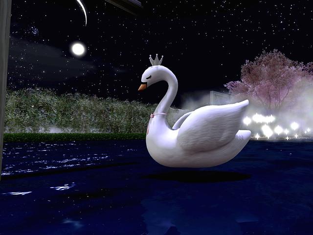 Luna te Amo - Looking for A Bit of Faithfulness In An Unfaithful World