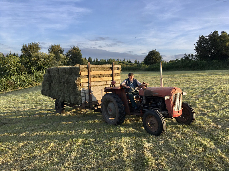 A photo of a farmer driving an old red tractor towing a trailer stacked with hay bales, in the evening sunlight