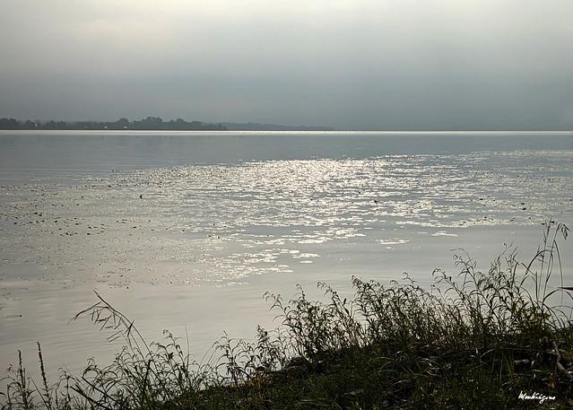 The Silver River - La rivière argentée
