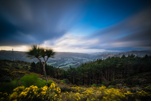 <p>Wind on a north-facing slope transforms the gorse and broom flowers and the clouds to smears of colour in this  30 second exposure.</p>