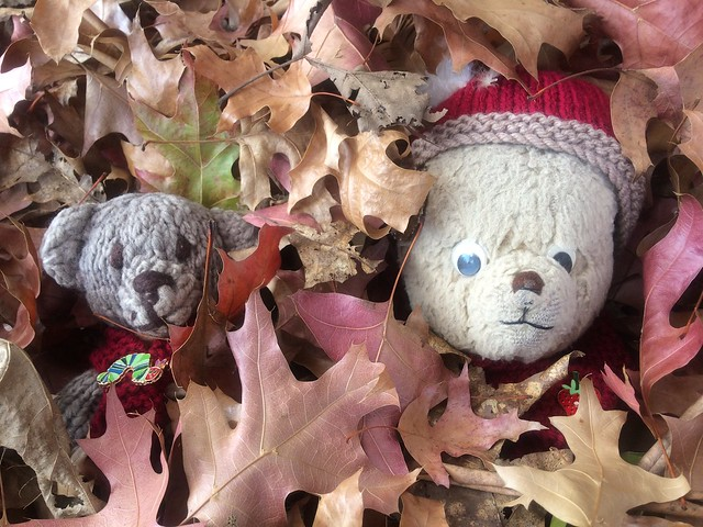 Paddington and Scout Both Hide in the Autumn Leaves 2.