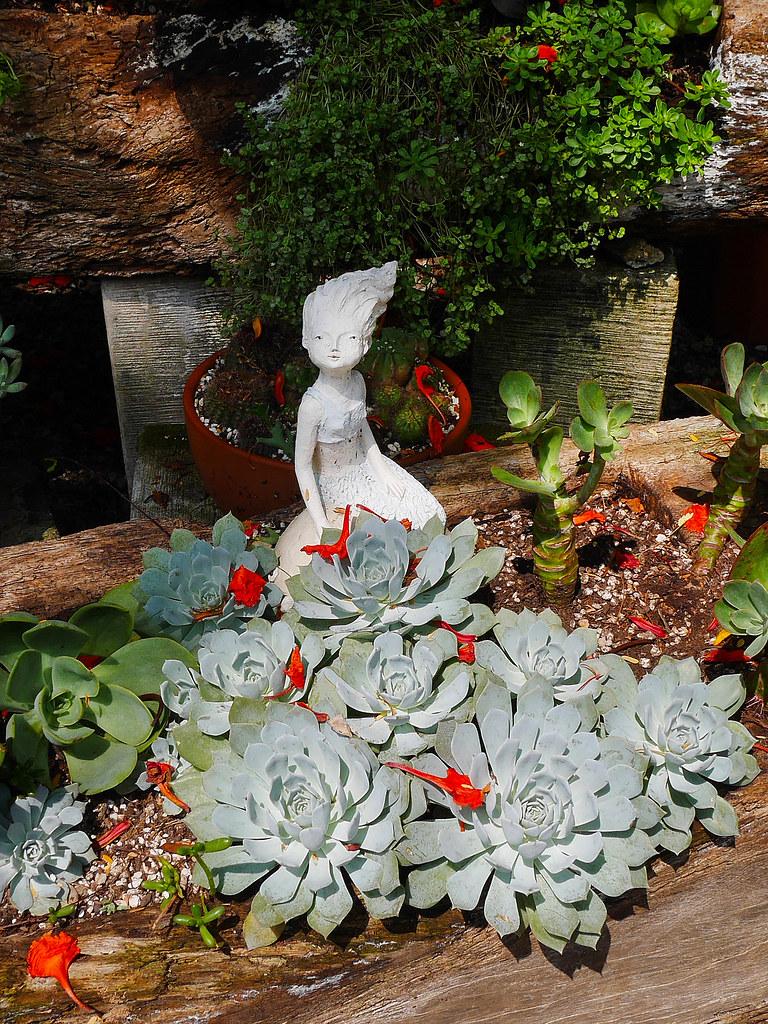 桃園楊梅景點雅聞魅力博覽館免費參觀歐式花園玫瑰園噴水池庭園造景植物園 (6)