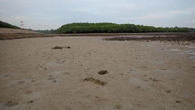 Living sandy shores of Pulau Semakau (East), Aug 2021