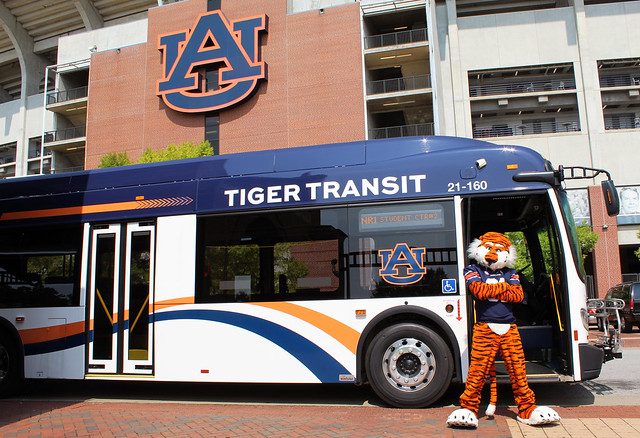 Aubie standing in front of a new Tiger Transit.