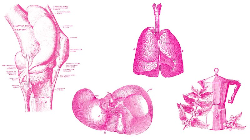 A collage of anatomical line drawings