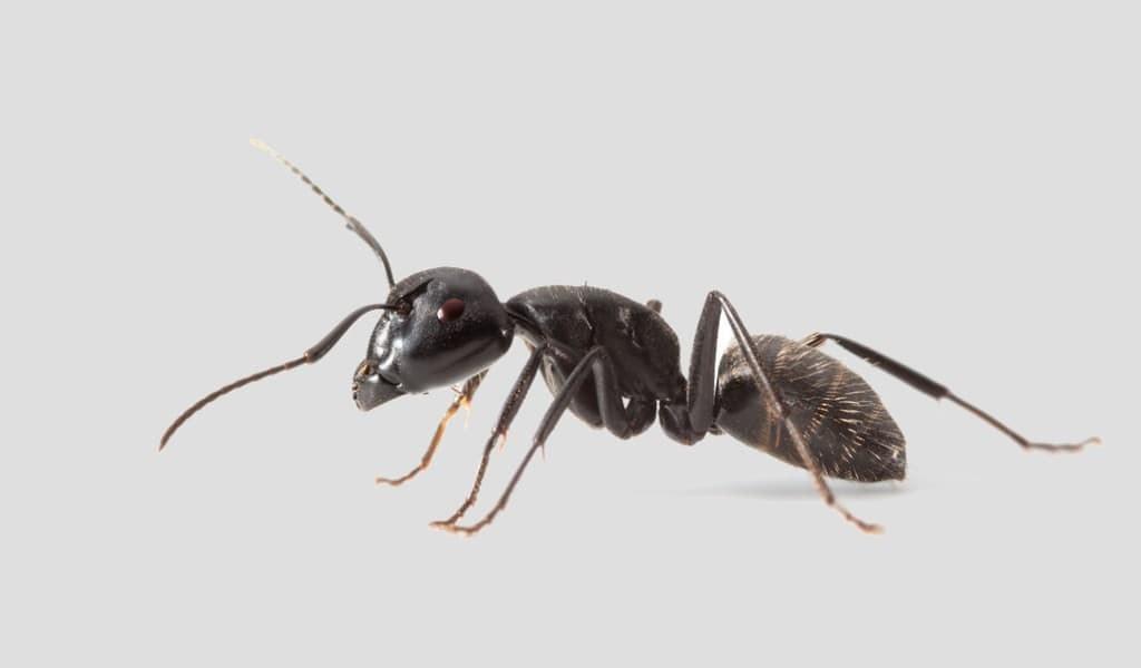 Les fourmis utilisent la physique du sol pour creuser des tunnels