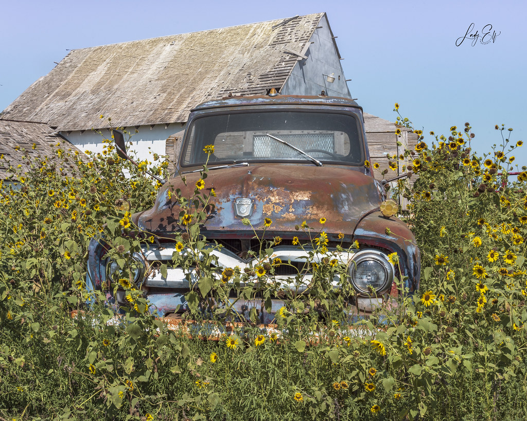 Ford, Rust, Sunflowers, Flat Sky