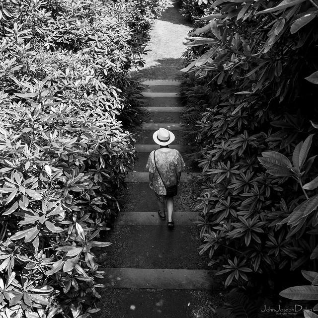 pathway   wentworth castle gardens