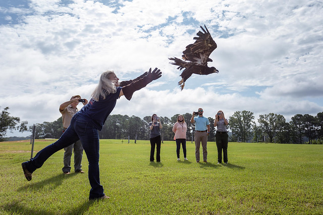 Valerie Castanza releases a young bald eagle.
