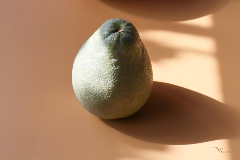 麻豆老老樹文旦