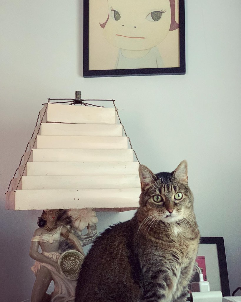 My sweet Olive, a ticked tabby, perched on my dresser while looking alarmed