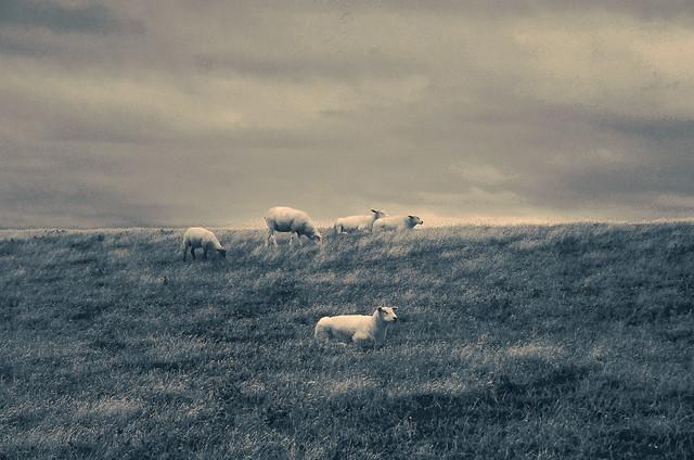 Happy herd