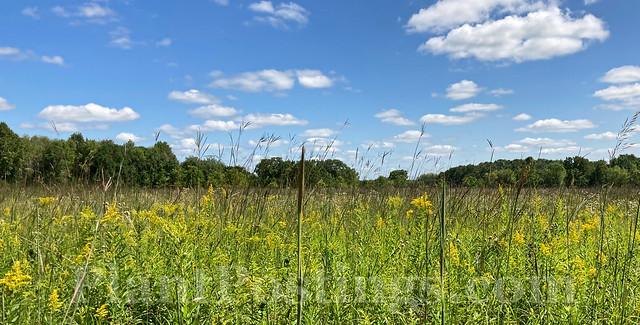 prairie late summer