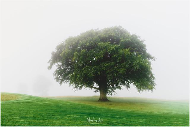 Isolatree