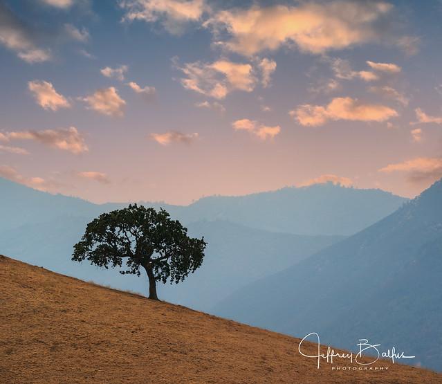 Lone Oak sunset  945668-3