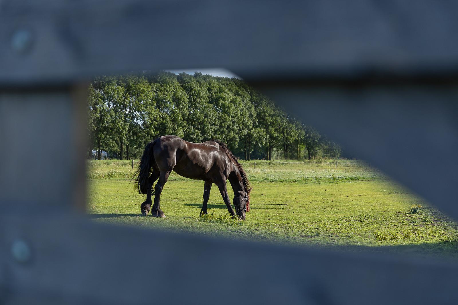 Thema Dieren - Paard - Hendrik Zuid