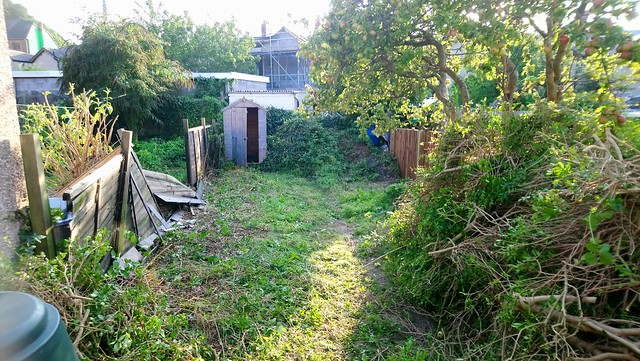 My garden after the hedge was removed.