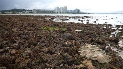 Living shores of Pulau Tekukor, Aug 2021