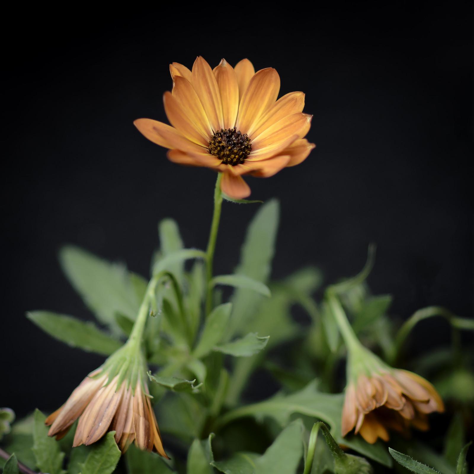 Opdracht 4 Bloemen_planten Di 17-08-21_92932 kopiëren - Joop Wollendorf