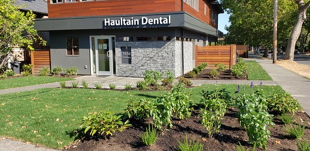 The Dentist's New Landscaping