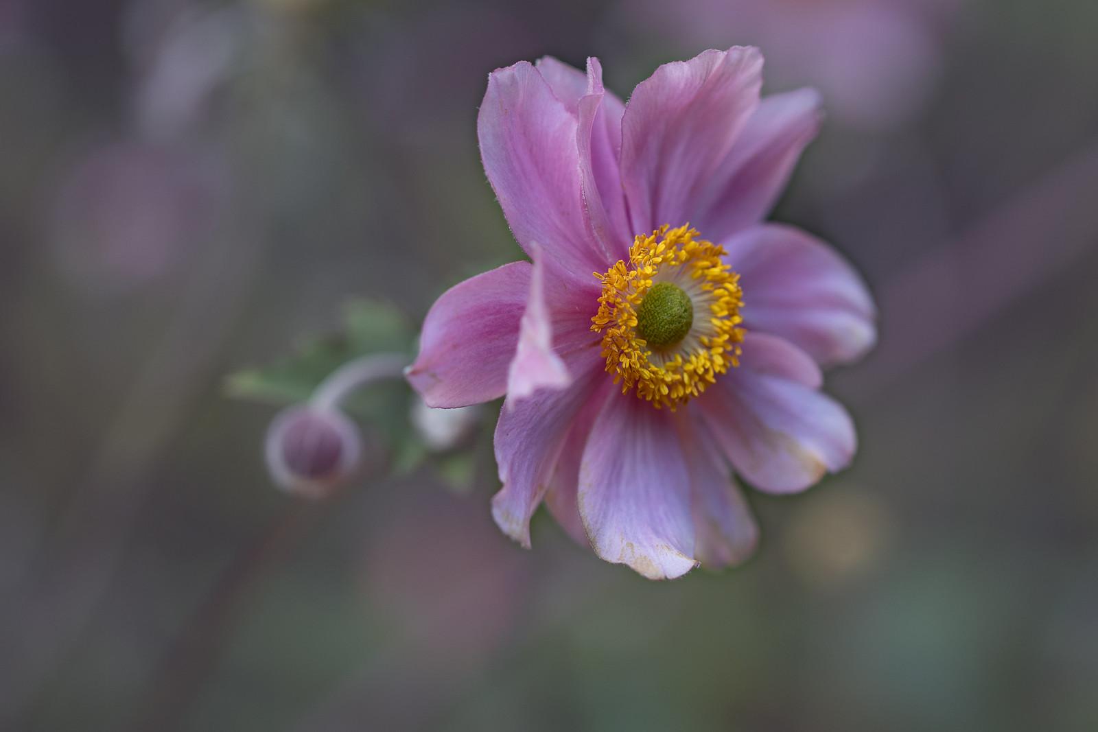 Thema Bloemen- - Hendrik Zuid