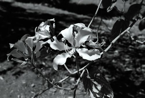 L.A. County Arboretum (17)