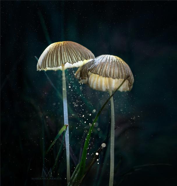 parasols in love