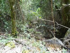 Au retour, vues dans le ruisseau en bas de la pente terminale