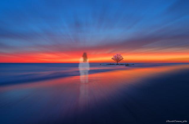 The spirit of an impossible cherry tree - El espíritu de un cerezo imposible