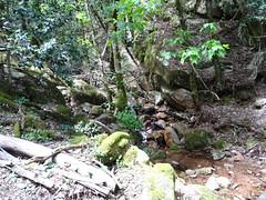 Au retour, fin de la descente de la raide pente terminale et arrivée dans le ruisseau affluent