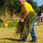 Harvesting Oats at Minard
