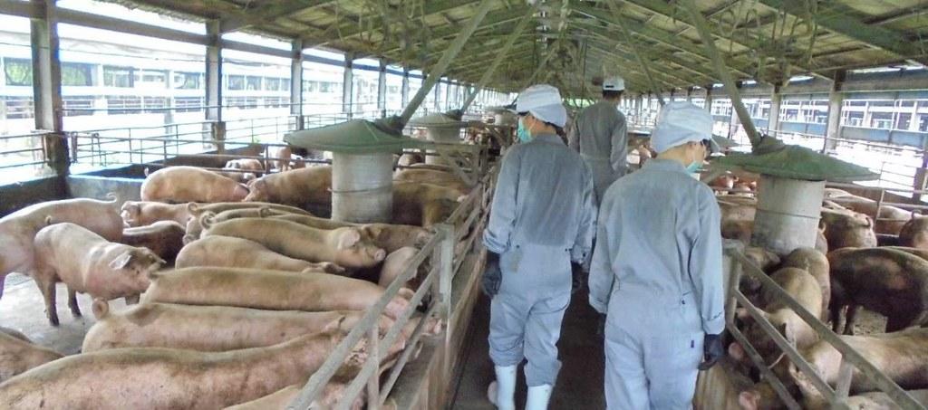 20210825市面查獲走私越南非洲豬瘟陽性豬肉品案。養豬場訪視。照片提供:農委會