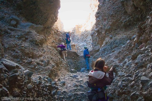 Climbing up n impassible dryfall... because it's fun, right?  Sidewinder Canyon, Death Valley National Park, California