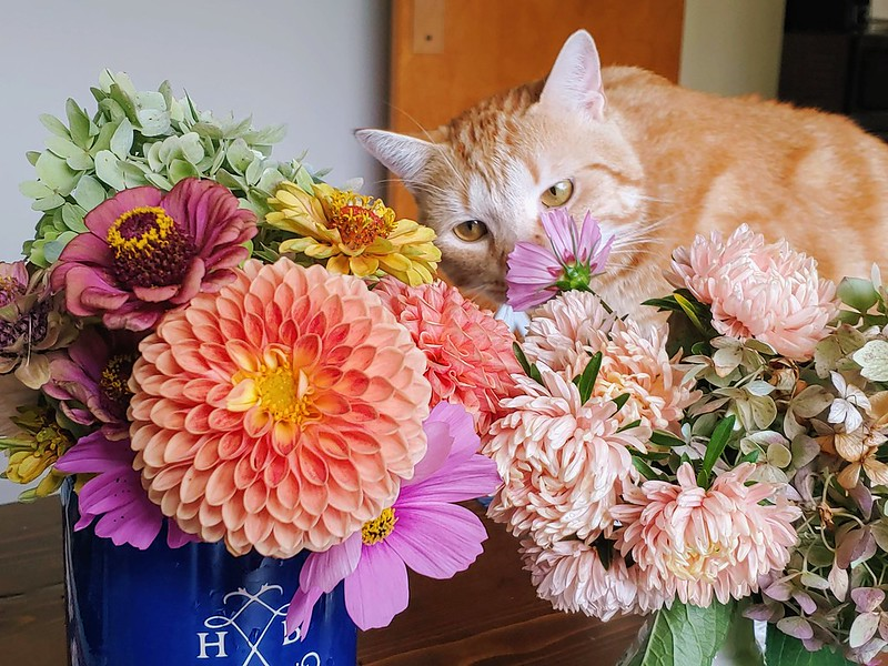 O sniffestigating the latest bouquets