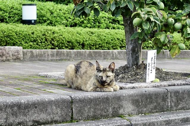 Today's Cat@2021−08−26