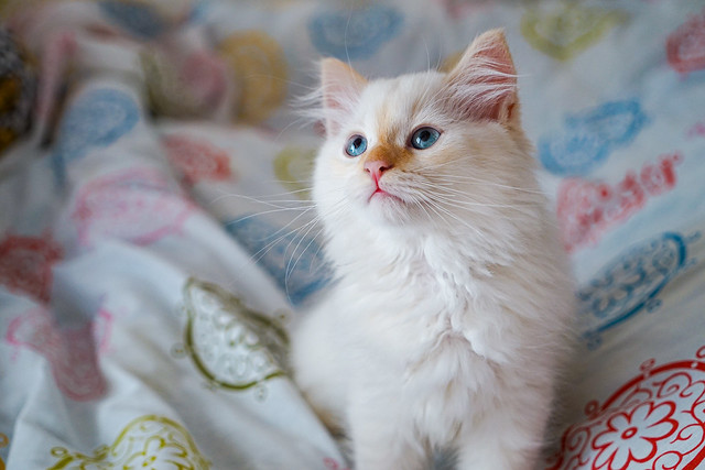 Kitten who discovers life