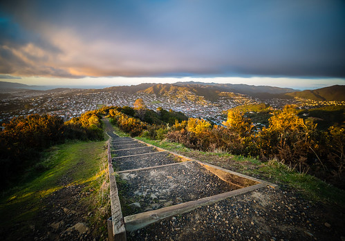 <p>The sun dusts the gorse and broom lining the stair at the top of Karori's Johnston Hill.</p>