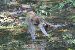 Borneo Wildlife