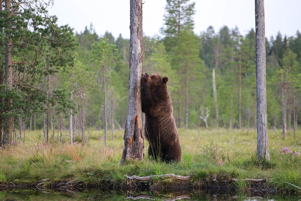 Karhusafari Wildlife Safaris Finland