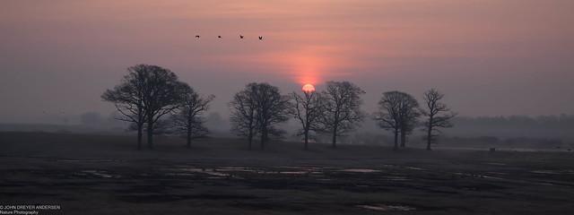 Hornborgjön early morning